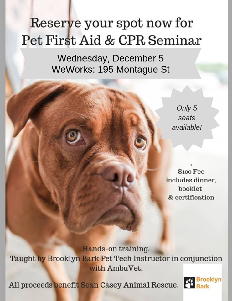 Pet First Aid And Cpr Class In Brooklyn